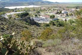 native plants in southern california native plants csu channel islands