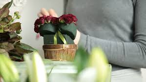 Arranging Roses In Vase Woman Arranging Flowers In Flower Retail Shop Stock Footage Video