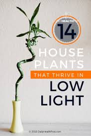 Best Low Light Indoor Plants by 14 Best Low Light House Plants To Grow At Home