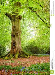 tree trunk in woodland stock photos image 34857783
