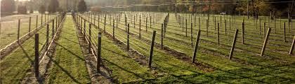 Grape Trellis For Sale Lb Fencing Vineyard Orchard And Hops Trellises