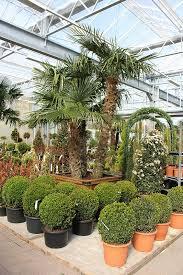 balkon grã npflanzen balkonpflanzen und gartenpflanzen garten center crumbachgarten