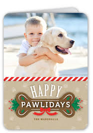 dog christmas cards 12 christmas card ideas with dogs shutterfly