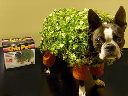 underdog halloween costume the 25 best pet costumes for dogs ideas on pinterest halloween
