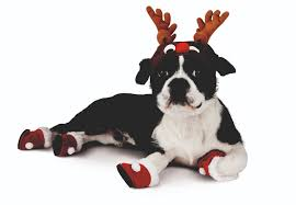 the naught u0026 nice list tips for a happy u0026 pet safe holiday