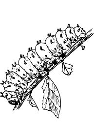 download coloring pages caterpillar coloring pages wooly bear