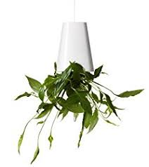 guide to house plants tips for growing plants indoors