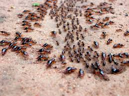 where do ants live wonderopolis