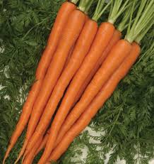 choose an imperator type sugarsnax 54 carrot seeds to plant in