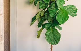 home decor plant plant home decor plants living room trends with japanese