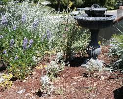 native plants of massachusetts white sage cynthia u0027s native garden