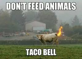 Taco Memes - feed animals taco bell meme