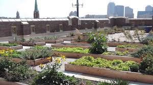 rothenberg rooftop garden project of the week 11 3 14 youtube