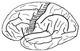 What Portion Of The Brain Controls Respiration Respiration Control Boundless Anatomy And Physiology