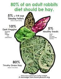 rabbit food rabbit diets pellets vs muesli
