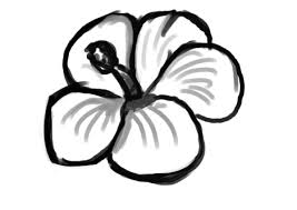 hibiscus flower outline free download clip art free clip art