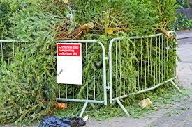 st petersburg offers free christmas tree recycling florida