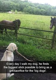 Stick Memes 28 Images Funny - 28 hilarious dog snapchats will warm your heart hilarious dog and
