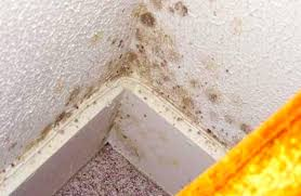 Remove Mold From Walls In Bathroom Mold Bathroom Ceiling - Removing mildew from bathroom walls 2
