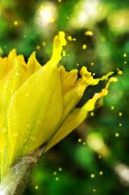 Color Yellow 798 Best Yellow Green Images On Pinterest Yellow Flowers