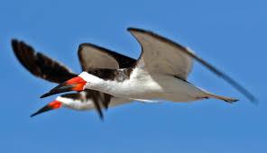 10 birds with the most bizarre bills you u0027ve ever seen toptenz net