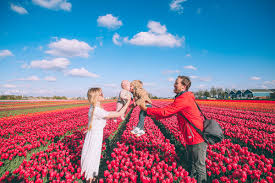 Netherlands Tulip Fields Tulip Fields And Windmills In Holland Barefoot Blonde By Amber