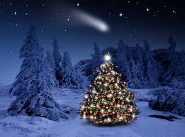 Lighted Christmas Trees Lighted Christmas Tree In Winter Forest Full Hd Wallpaper And