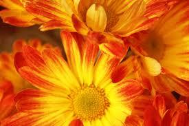 Fall Flowers Autumn Flowers By Cellomaster71 On Deviantart Glorious Autumn