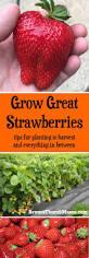 5497 dintre cele mai bune imagini din share kitchen garden ideas