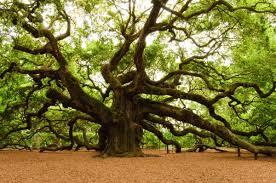 celtic zodiac oak tree sun signs