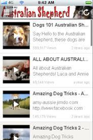 australian shepherd 101 australian shepherd android apps on google play