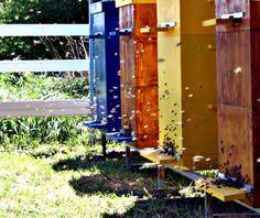 Backyard Beehive Painted Beehive Bee Pest Control Pinterest Beehive Bees And