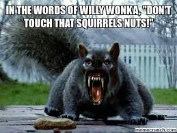 Squirrel Nuts Meme - the words of willy wonka don t touch that squirrels nuts