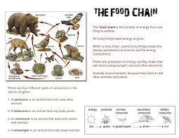 Food Chains Worksheet The Dyslexic Homeschooler New Food Chain Worksheets I Just Made