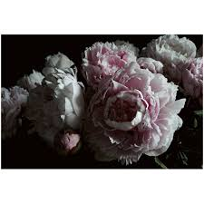 Peonies Delivery Peonies Print Statement Wall Art