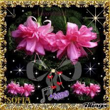 imagenes flores bellisimas bellas flores de amor sofia fotografía 120144664 blingee com
