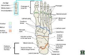 Diagram Of Knee Anatomy Human Body Blood Vessels Body And Blood Vessels Human Anatomy Charts