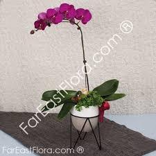 Orchid Plants Orchid Plants Singapore Fareastflora Com