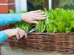 get started growing 5 easy small vegetable garden ideas to try