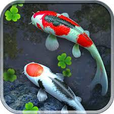 wallpaper ikan bergerak untuk pc wallpaper fish bergerak eacfkoa6yufdwmpnhtg