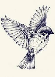 bird tattoo tatoos pinterest tattoo bird sketch