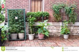 vegetable garden peppers