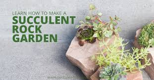 Rock Garden Succulents Cold Hardy Succulent Rock Garden Succulents And