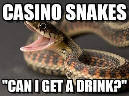 Funny Casino Memes - casino snakes can i get a drink funny meme image