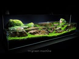 Aquascape Online Aquascape Tutorial Guide U0027continuity U0027 By James Findley U0026 The