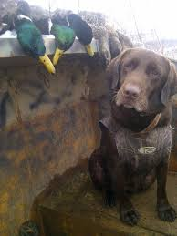 best 25 duck hunting season ideas on pinterest hunting hunting