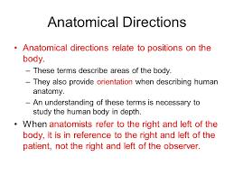 Human Anatomy Planes Of The Body Body Directions And Planes Anatomical Directions Anatomical