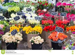 flowers for sale flowers for sale at flower market amsterdam netherlands
