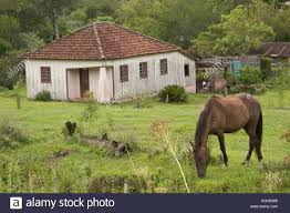 old farm house with horse in field eating grass brasil brazil