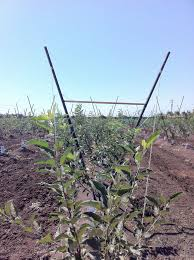 apple trellis jim u0027s supply company inc
